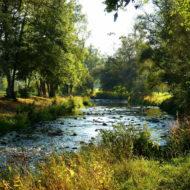 Fluss der an einem Waldgebiet verläuft