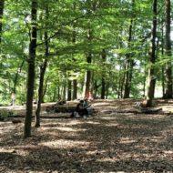 Verschiedene Personen beim Waldbaden im Wald